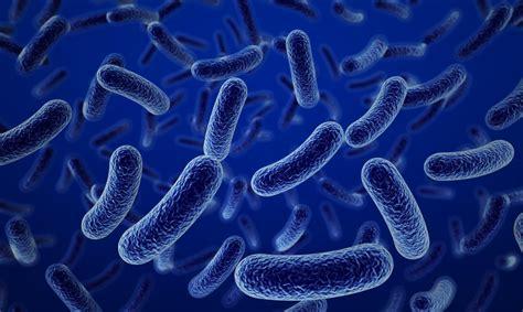 imagenes uñas hongos 191 c 243 mo se alimentan las bacterias batanga