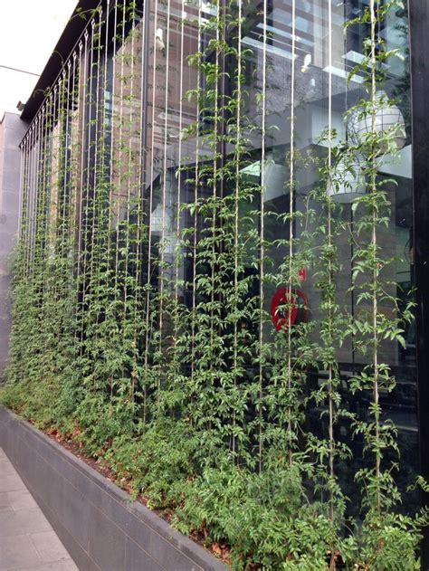 how to build a trellis for climbing plants vertical garden climbing on wires v豌盻拵 treo