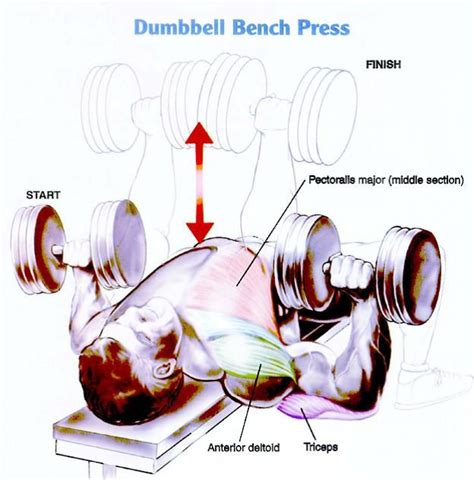 bench press workout for mass best 25 chest exercises for mass ideas on pinterest
