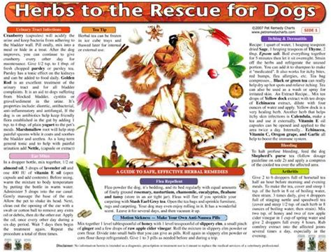 herbs for dogs 1000 images about home remedies and home cures for dogs on for dogs
