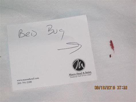 hotel bed bugs compensation hotel bed bugs compensation image search results