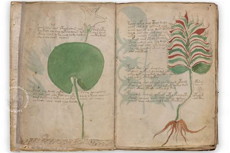 picture book manuscript voynich manuscript facsimile replica of the mysterious