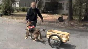 hunde wagen hunde wagen ziehen