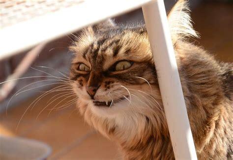 Lu Mata Kucing Avanza 11 tang aneh kucing yang bikin kita gak gemes lagi ama