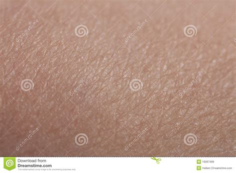 human skin royalty free stock images image 17108889 human skin forearm royalty free stock images image 19267499