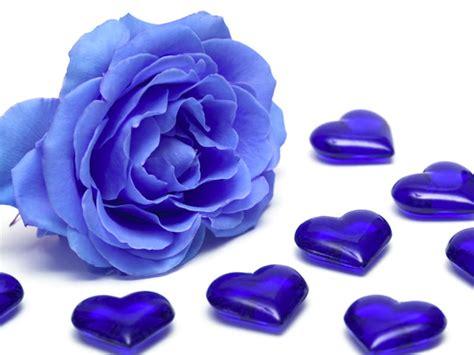disegno di rosa fiore come colorare una rosa di scelte per te giradinaggio