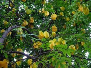 Minyak Kutus Kutus Lazada informasi belajar anak interaktif jenis pohon dengan daun