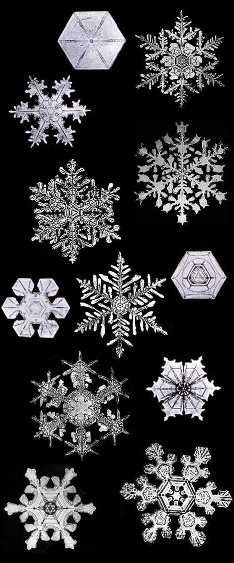 bentley snowflake pictures the iconic and groundbreaking photography of wilson