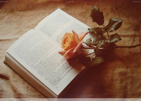 imagenes de rosas sobre libros el libro y la rosa jorge meyer artelista com
