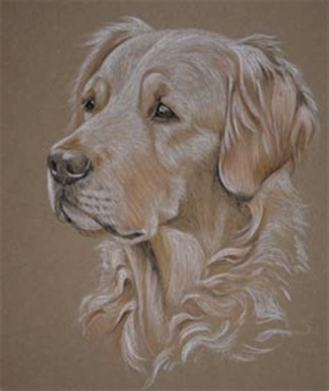 sally s golden retrievers individual pet portraits