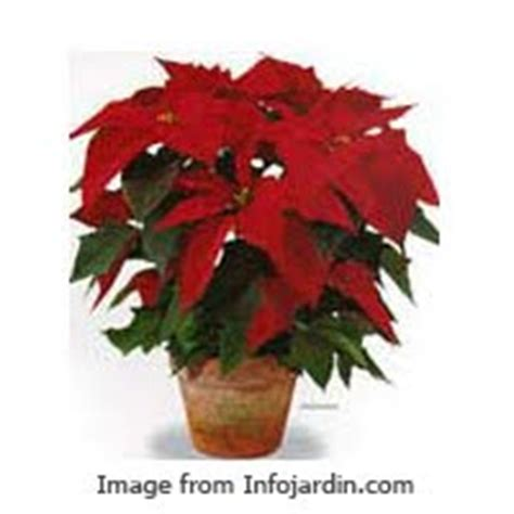 Hiasan Bunga Natal rangkaian bunga natal ayoo serbu pernak pernik untuk