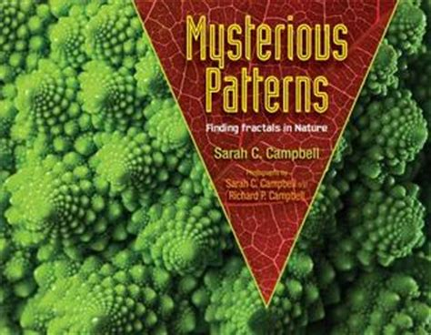 pattern finding in c mysterious patterns finding fractals in nature by sarah c