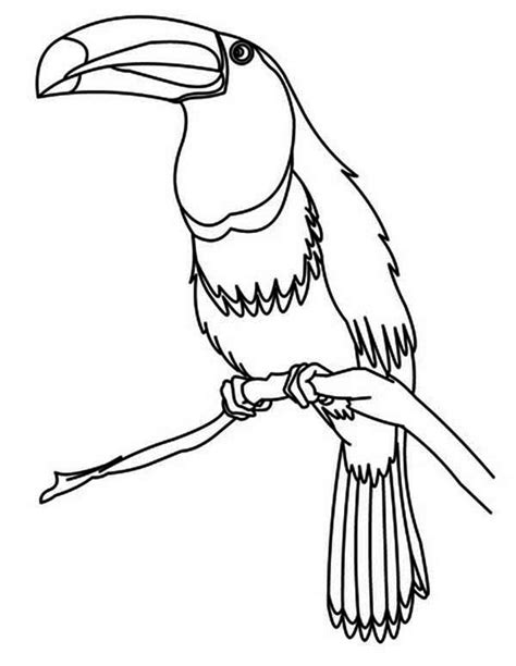coloring page of a toucan bird toucan bird coloring page for kids coloring page of a