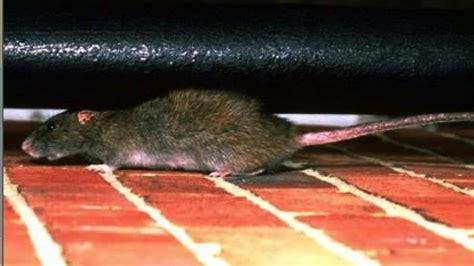 rat exterminator cost angies list
