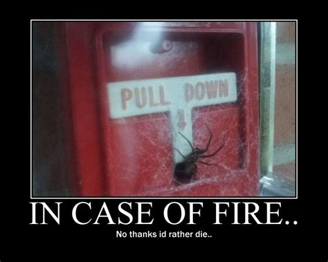 Spider Fire Alarm Meme - 301 moved permanently