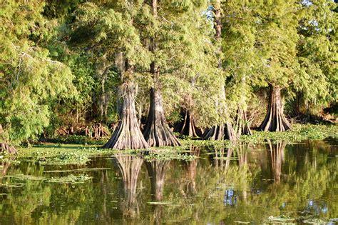 sw shark duck boat louisiana bayou photography www pixshark images