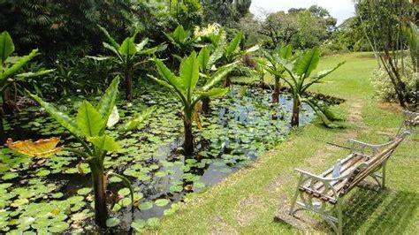 Seychelles National Botanical Gardens Water Plants Picture Of Seychelles National Botanical