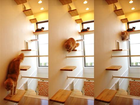 Cat Room Ideas by Indoor Cat Room Ideas Search Decorating My