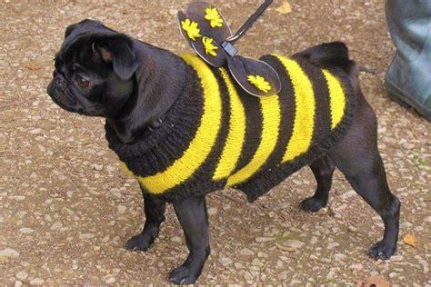 pug bumblebee costume my future pug s costumes on pugs chia pet and pug costume
