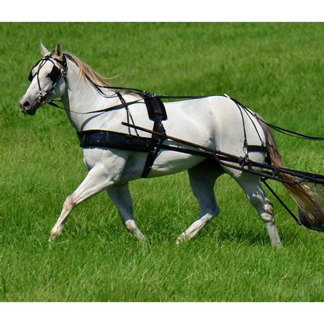 Horse Tack Giveaway - two horse tack biothane harness