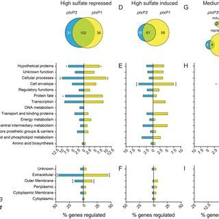 differentially expressed genes  bordetella pertussis strains belonging   lineage