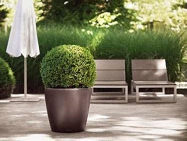 alberi da vaso per esterno vasi per piante da esterno vasi come scegliere i vasi