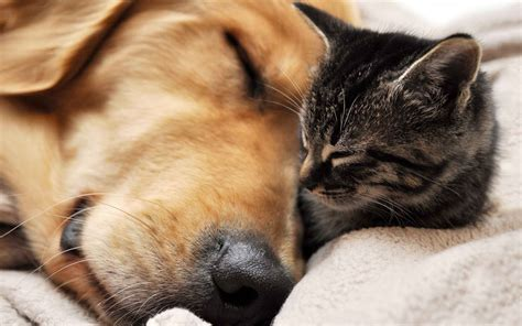kittens and puppies cats and dogs sleeping together memes