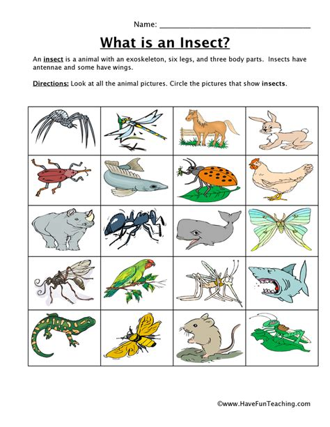 kids bug and insects worksheets insect worksheets have fun teaching