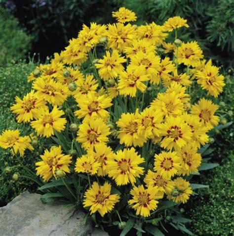 fiori gialli da giardino fiori gialli da giardino perenni gpsreviewspot