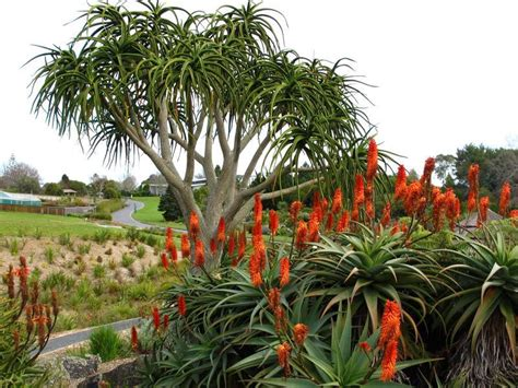 Auckland Botanic Gardens Auckland Botanic Gardens In Auckland My Guide Auckland