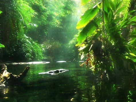 amazon brazil floresta amaz 244 nica amazonas brazil viagem pinterest