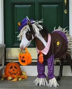 Pumpkin Costume Halloween - chevaux avec costumes un homme nomm 233 cheval