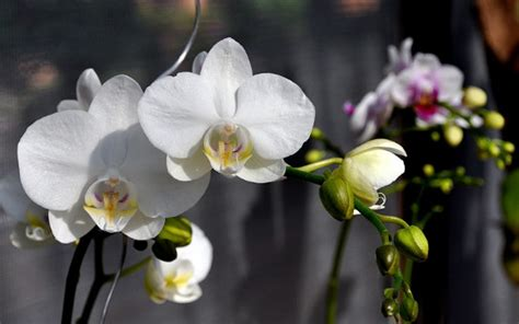 Jenis Pot Anggrek cara budidaya tanaman hias bunga anggrek bulan tanaman