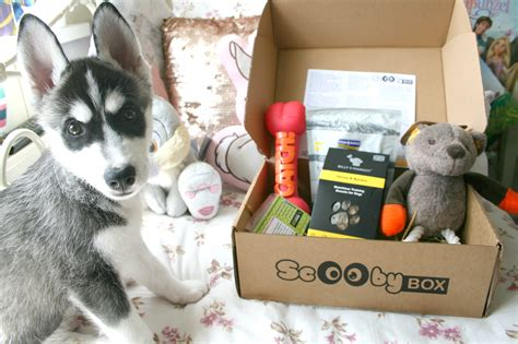 monthly subscription boxes for dogs scoobybox a monthly box of goodies