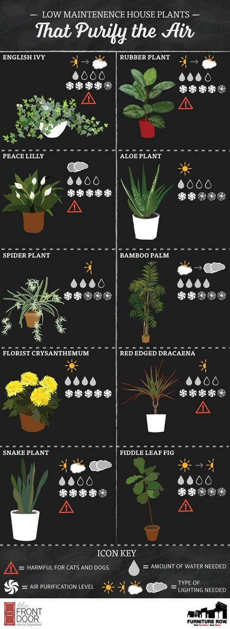 where to buy indoor house plants flowering house plants show your prides 100 flowering house plants flowering house p