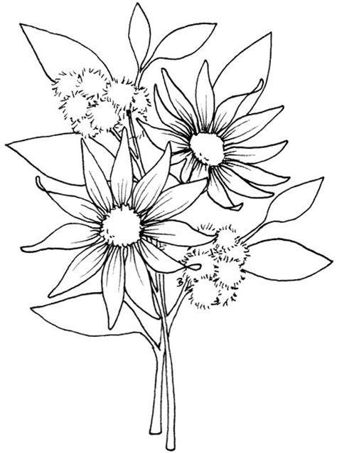 coloring pages of australian flowers beccy s place flannel flowers