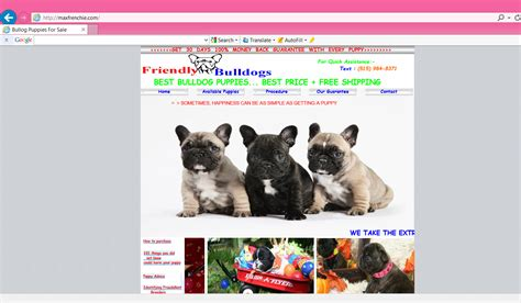 websites to buy puppies best puppy sale merry photo