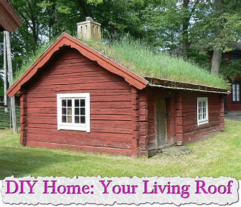Living Roof Shed by Diy Home Your Living Roof