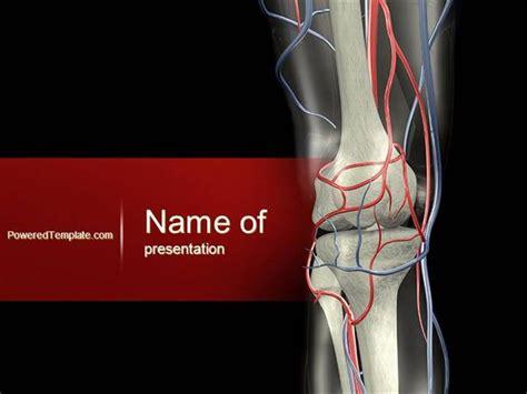 Powerpoint Templates Knee | knee powerpoint template authorstream