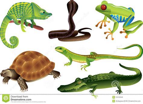 imagenes reptiles vector geplaatste reptielen en amfibieen vector illustratie