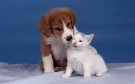 dogs with cats and cat wallpaper teddybear64 wallpaper 16835281 fanpop