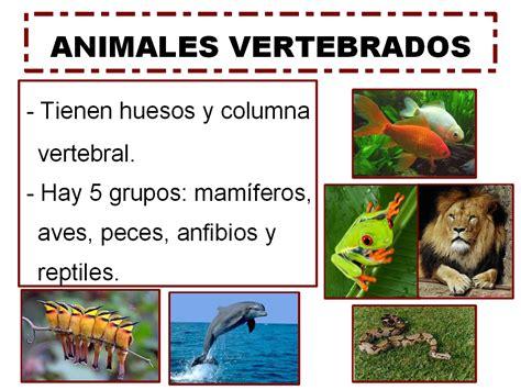 animales vertebrados mamiferos caracteristicas portal segundo de primaria cono