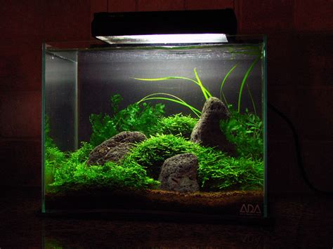 aquascaping magazine aquascaping world magazine interview with jeff p