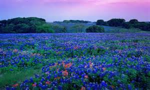 Florists In Tx Bluebonnets Five State Flowers
