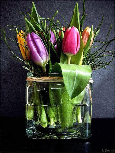 tulpe fr 252 hling and bloemen on - Tulpen Im Glas