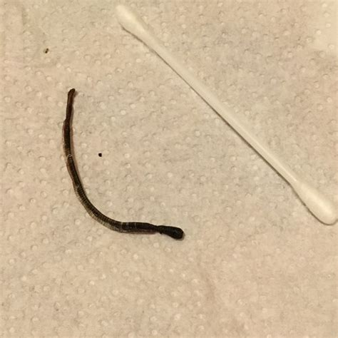 small worms in house that curl up small worms in house that curl up 28 images let your