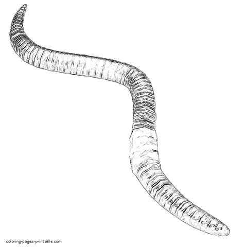 color worm worm coloring page twisty noodle sketch coloring page