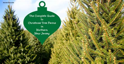 best christmas tree farm in nj 28 best new jersey tree farm creates dragonfly farms hamilton new jersey trees