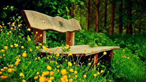 flower bench bench in nature wallpaper