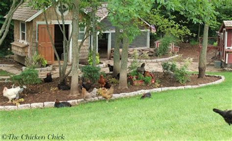 how to care for chickens in your backyard the chicken 174 veterinary care for backyard chickens